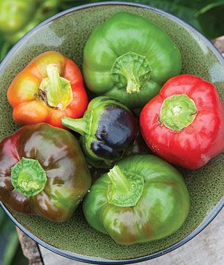 Pepper, Sweet, Sheepnose Pimento 1 Pkt.(25 Seeds) Pepper Seeds, Sweet Pepper Seeds, Stuffing Peppers, Bell Peppers, Sweet Peppers, Bell Pepper Seeds