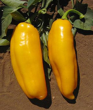 Pepper, Sweet, Marconi Golden 1 Pkt.(30 Seeds) Pepper Seeds, Sweet Pepper Seeds, Stuffing Peppers, Bell Peppers, Sweet Peppers, Bell Pepper Seeds