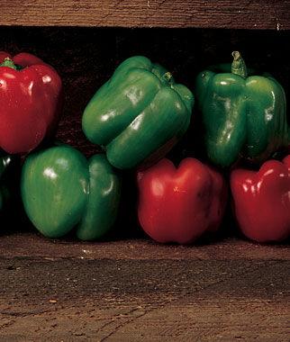 Pepper, Sweet, Emerald Giant 1 Pkt. Pepper Seeds, Sweet Pepper Seeds, Stuffing Peppers, Bell Peppers, Sweet Peppers, Bell Pepper Seeds