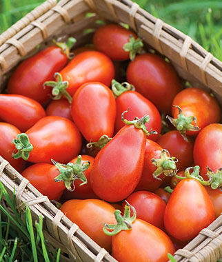 Tomato, Red Pear 1 Pkt.(25 Seeds) Heirloom Tomatoes, Heirloom Tomato Seeds, Heirloom Seeds, Heirloom Tomato Plants, Tomato Seeds