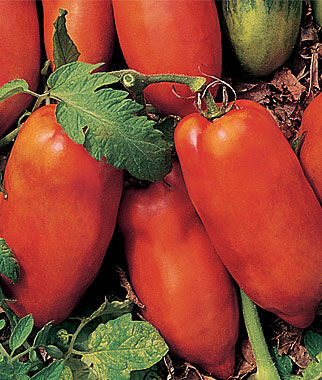 Tomato, Polish Linguisa 1 Pkt.(30 Seeds) Heirloom Tomatoes, Heirloom Tomato Seeds, Heirloom Seeds, Heirloom Tomato Plants, Tomato Seeds