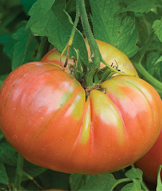Tomato, German Pink 1 Pkt.(25 Seeds) Heirloom Tomatoes, Heirloom Tomato Seeds, Heirloom Seeds, Heirloom Tomato Plants, Tomato Seeds
