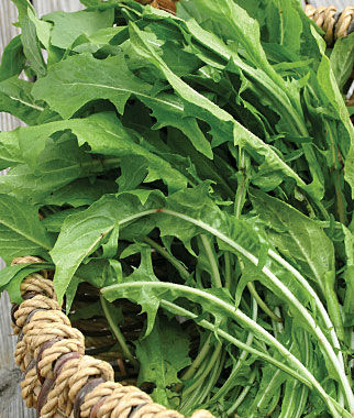 Salad Greens, Dandelion 1 Pkt.(500 Seeds) Salad Greens Seeds, Salad Greens Seed, Salad Seeds, Salad Greens, Garden Seeds, Vegetable Seeds