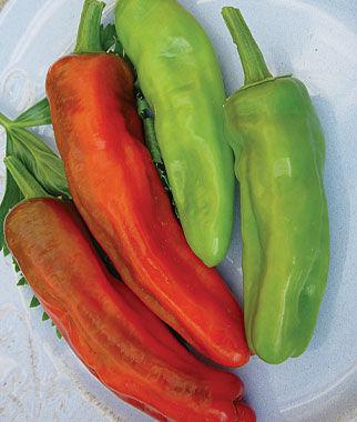 Pepper, Sweet, Friggitello 1 Pkt. Pepper Seeds, Sweet Pepper Seeds, Stuffing Peppers, Bell Peppers, Sweet Peppers, Bell Pepper Seeds