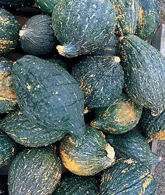 Squash, True Hubbard 1 Pkt. (15 seeds) Winter Squash Seeds, Winter Squash Seed, Winter Squash, Squash Seeds, Squash, Garden Seeds, Seeds