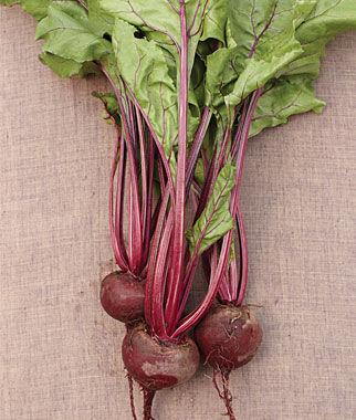 Beet, Early Wonder 1 Pkt.(500 Seeds), Beet Seeds, Beets, Beet Seed, Seeds, Garden Seeds, Vegetable Seeds, Garden Supplies