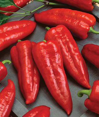 Pepper, Sweet, Marconi Rosso 1 Pkt.(20 Seeds) Pepper Seeds, Sweet Pepper Seeds, Stuffing Peppers, Bell Peppers, Sweet Peppers, Bell Pepper Seeds