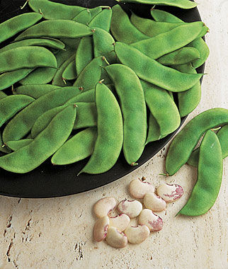 Bean, Cannelino 1 Pkt. (100 seeds), Bean Seeds, Bush Beans, Beans - Bush, Bush Bean Seeds, Vegetable Seeds, Garden Seeds, Vegetable Seed