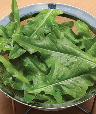 Lettuce, Oak Leaf 1 Pkt.(1000 Seeds) Lettuce Seed, Lettuce Seeds, Salad Greens, Lettuce, Lettuce Mix, Mesclun, Garden Seeds, Salad Seeds