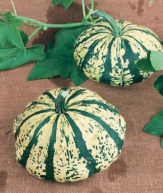 Squash, Verte et Blanc 1 Pkt.(20 Seeds) Summer Squash Seeds, Summer Squash Seed, Squash Seeds, Summer Squash, Garden Seeds, Vegetable Seeds