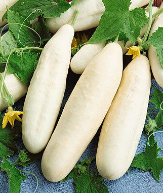 Cucumber, White Wonder 1 Pkt.(25 Seeds)