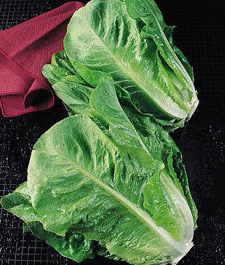 Lettuce, Parris Island Cos 1 Pkt. Lettuce Seed, Lettuce Seeds, Salad Greens, Lettuce, Lettuce Mix, Mesclun, Garden Seeds, Salad Seeds