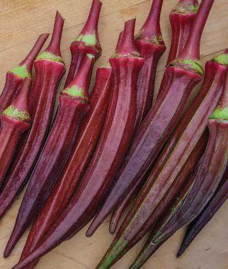 Okra, Burgundy 1 Pkt.(35 Seeds) Orka, Okra Seeds, Okra Seed, Seeds, Okra Plants, Vegetable Seeds, Vegetable Plants, Garden Seeds