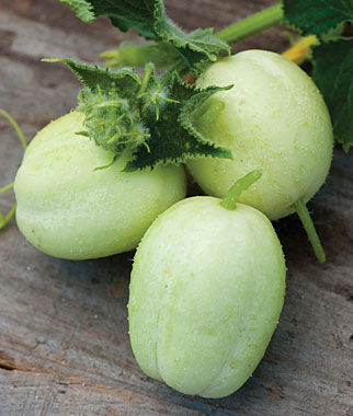 Cucumber, Crystal Apple 1 Pkt.(25 Seeds)