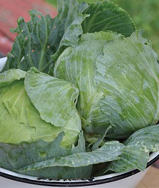 Cabbage, Charleston Wakefield 1 Pkt.(200 Seeds) Cabbage Seeds, Cabbage Seeds, Cabbages Seed, Cabage Seeds, Cabbage, Garden Seeds, Vegetable Seeds