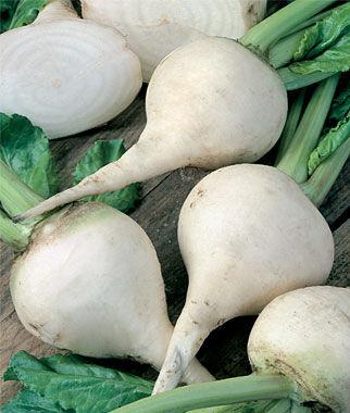 Beet, Albino 1 Pkt., Beet Seeds, Beets, Beet Seed, Seeds, Garden Seeds, Vegetable Seeds, Garden Supplies
