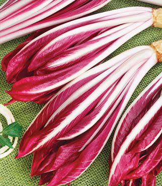 Radicchio, Red Treviso 1 Pkt.(100 Seeds) Radicchio, Radicchio Seed, Radicchio Seeds, Salad Greens, Garden Seeds, Vegetable Seeds, Seeds