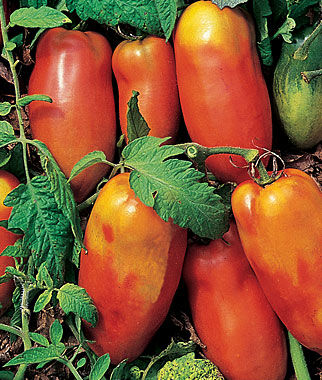 Tomato, Super Italian Paste 1 Pkt.(50 Seeds), Heirloom Tomatoes, Heirloom Tomato Seeds, Heirloom Seeds, Heirloom Tomato Plants, Tomato Seeds