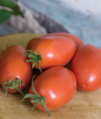 Tomato, Amish Paste 1 Pkt.(25 Seeds) Heirloom Tomatoes, Heirloom Tomato Seeds, Heirloom Seeds, Heirloom Tomato Plants, Tomato Seeds