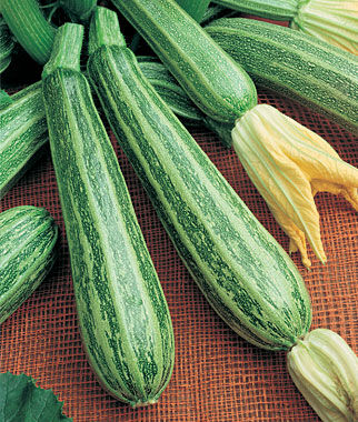 Squash, Summer, Cocozelle 1 Pkt. Zucchini Seeds, Zucchini Seed, Summer Squash, Squash, Zucchini Squash, Garden Seeds, Vegetable Seeds