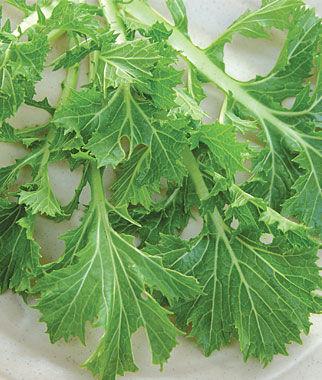 Mustard, Mizuna 1 Pkt.(1000 Seeds) Asian Greens Seeds, Oriental Vegetables, Chinese, Japanese, Thai, Vietnamese, Cookbooks, Kitchen