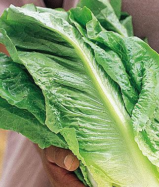 Lettuce, Paris White Cos 1 Pkt. (750 Seeds) Lettuce Seed, Lettuce Seeds, Salad Greens, Lettuce, Lettuce Mix, Mesclun, Garden Seeds, Salad Seeds