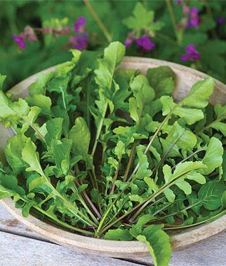 "Arugula, Selvatica Organic 1 Pkt. (500 Seeds) Arugula Seed, Rocket Seed, Arugula ""Rocket"", Arugula, Garden Seed, Vegetable Seed, Seed, Garden"