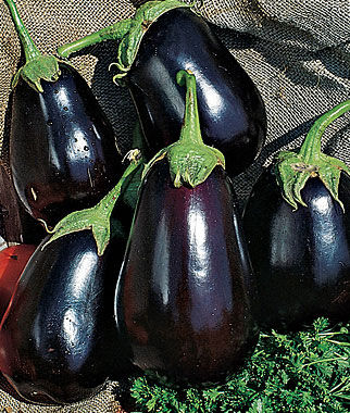 Eggplant, Black Beauty Organic 1 Pkt. (50 Seeds) Eggplant Seeds, Eggplant Seed, Eggplant Plants, Eggplant Starts, Eggplant, Garden Seeds, Garden
