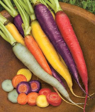 Carrot, Kaleidoscope Blend Organic 1 Pkt. (1500 Seeds) Carrot, Carrot Seeds, Carrot Seed, Seeds, Vegetable Seeds, Vegetable Garden Supplies, Garden Seeds