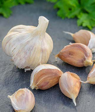 Garlic, German Red 1/2 lb Garlic, Garlic Sets, Garlic Plants, Garlic bulbs, Garden Supplies, Vegetable Garden