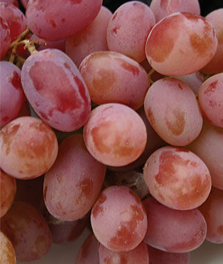 Grape, Einset Seedless PP6160 2 Bare Root Plants Grapes, Grape Vines, Grape Plants, Grape Starts, Bare Root Grapes, Fruit Plants, Fruit Garden, Vines
