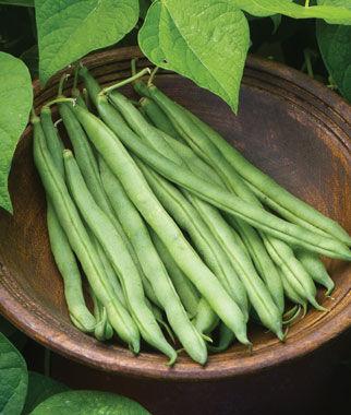 Bean, Bush, Big Kahuna 1 Pkt. (1/2 Lb.)
