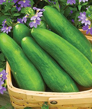 Cucumber, Speedy Green Hybrid 1 Pkt. (30 Seeds)