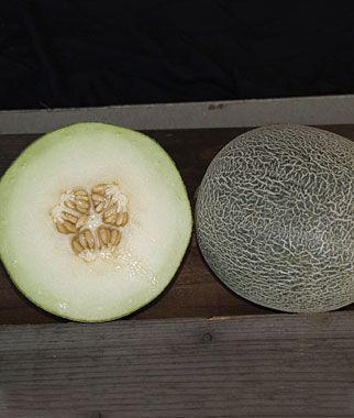 Melon, Galia Regalia Hybrid 1 Pkt. (30 Seeds)