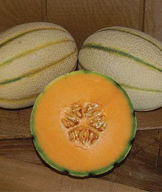 Melon, Tuscan, Bella Tuscana Hybrid 1 Pkt. (30 Seeds)