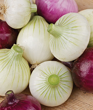 Onion, Short Day Collection 75 Plants Each Variety Onion Seeds, Onion Sets, Onion Plants, Scallion Seeds, Bunching Onions, Green Onions, Garden Seeds