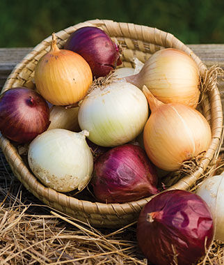 Onion, Long Day Collection 75 Plants Each Variety Onion Seeds, Onion Sets, Onion Plants, Scallion Seeds, Bunching Onions, Green Onions, Garden Seeds