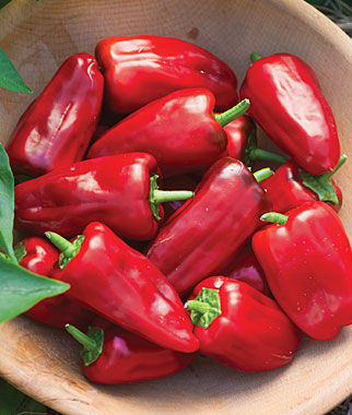 Pepper, Hot, Sweet Heat Hybrid 3 Plants Hot Pepper Seeds, Chili Pepper Seeds, Chili Seeds, Pepper Seeds, Peppers, Chilis, Garden Seeds, Seed