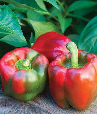 Pepper, Sweet, Block Party Hybrid 1 Pkt. (30 Seeds) Pepper Seeds, Sweet Pepper Seeds, Stuffing Peppers, Bell Peppers, Sweet Peppers, Bell Pepper Seeds