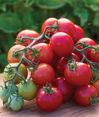 Tomato, Cherry Punch Hybrid 1 Pkt. (20 Seeds) Cherry Tomato Seeds, Currant Tomato Seeds, Grape Tomato Seeds, Cherry Tomato, Tomato Seeds