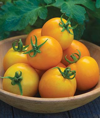 Tomato, Solar Power Hybrid 1 Pkt. (20 Seeds) Tomato Seeds, Early Tomatoes, Early Tomato Seeds, Tomato Plants, Short Season Tomatoes, Garden Seeds
