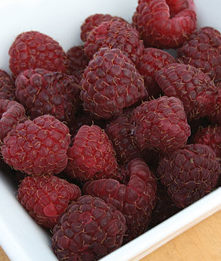 Raspberry, Crimson Night PPAF 1 Plant Raspberries, Raspberry, Raspberry Plants, Raspberry Roots, Berry Plants, Berry Garden, Fruit Garden