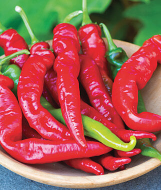 Pepper, Hot, Cheyenne Hybrid 1 Pkt. (30 seeds) Hot Pepper Seeds, Chili Pepper Seeds, Chili Seeds, Pepper Seeds, Peppers, Chilis, Garden Seeds, Seed