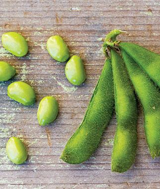 Bean, Soy, Midori Giant 1 Pkt. (85 seeds) Bean Seeds, Bush Beans, Beans - Bush, Bush Bean Seeds, Vegetable Seeds, Garden Seeds, Vegetable Seed