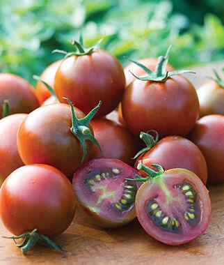 Tomato, Sunchocola Hybrid 1 Pkt. (10 seeds) Cherry Tomato Seeds, Currant Tomato Seeds, Grape Tomato Seeds, Cherry Tomato, Tomato Seeds