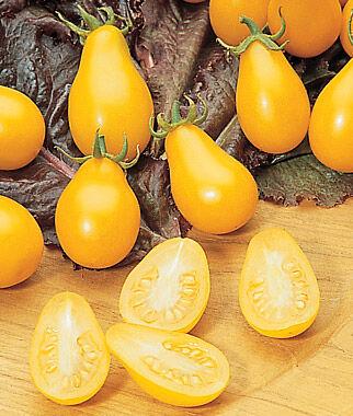 Grafted Tomato, Yellow Pear 1 Plant Cherry Tomato Seeds, Currant Tomato Seeds, Grape Tomato Seeds, Cherry Tomato, Tomato Seeds