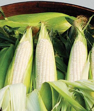 Corn, Amaize Hybrid 1 Pkt. (100 seeds) Corn Seeds, Corn Seed, Seed Corn, Corn, Sweet Corn Seeds, Super Sweet Corn Seeds, Garden Seeds