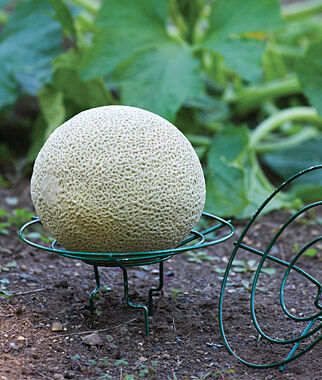 Melon and Squash Cradle