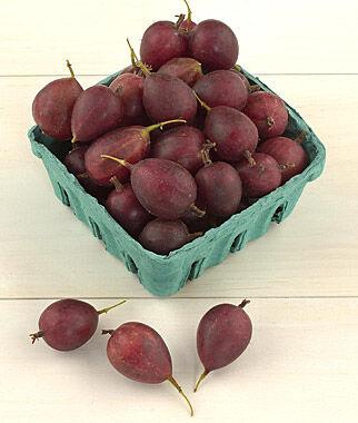 Gooseberry, Tixia 1 Plant Berries, Berry Plants, Berry Garden, Gooseberry, Currant, Honeyberry, Jostaberry, Goji Berry, Berry