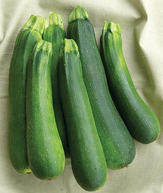 Squash, Burpee's Best Hybrid 1 Pkt. (20 seeds) Zucchini Seeds, Zucchini Seed, Summer Squash, Squash, Zucchini Squash, Garden Seeds, Vegetable Seeds